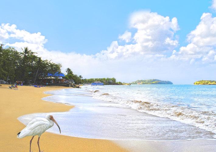 Caribbean Rental St Lucia